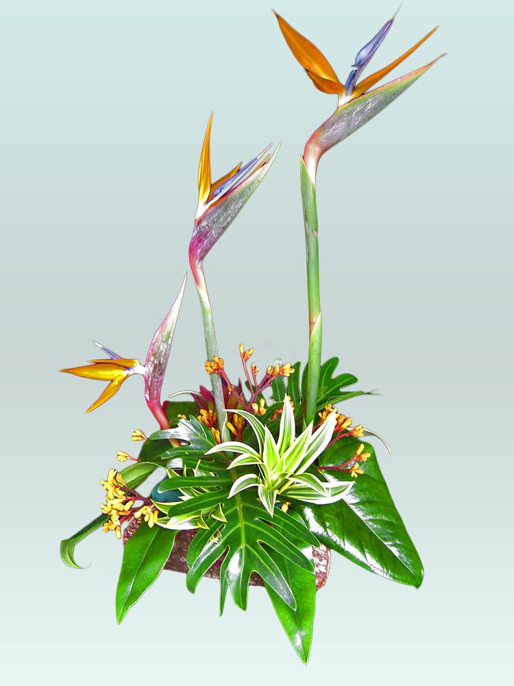Arreglos florales colombia arreglos florales bogota - Arreglos florales naturales ...